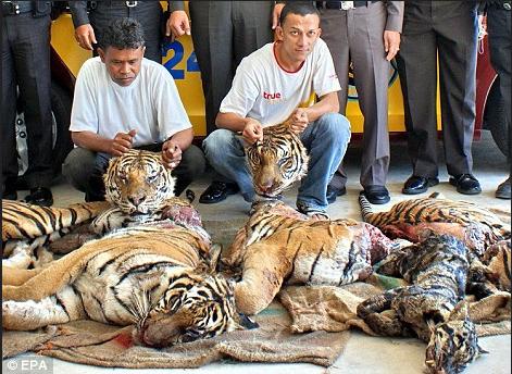 comercio-tigres1
