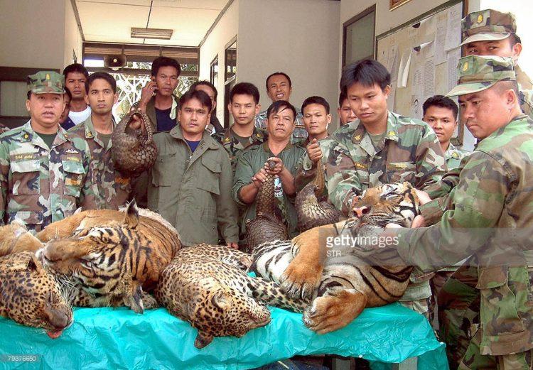 comercio-tigres2