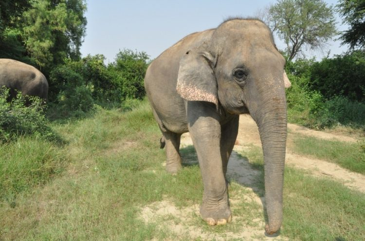 elefante-golpeado-camion1