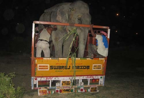 elefante-golpeado-camion2