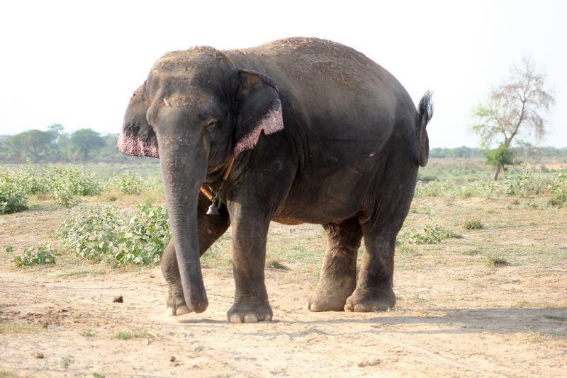 elefante-golpeado-camion4
