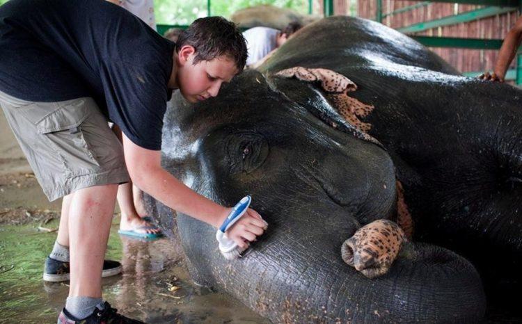 elefante-golpeado-camion6