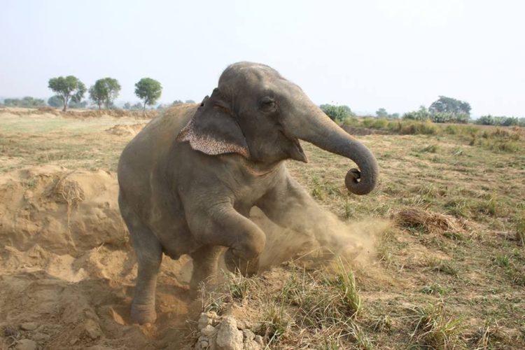 elefante-golpeado-camion8