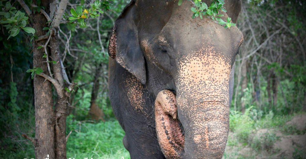 elefante-obligado-trabajar