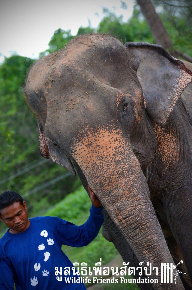 elefante-obligado-trabajar1
