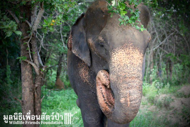 elefante-obligado-trabajar3