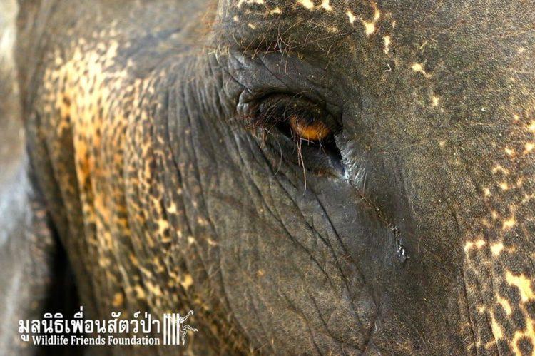 elefante-obligado-trabajar5