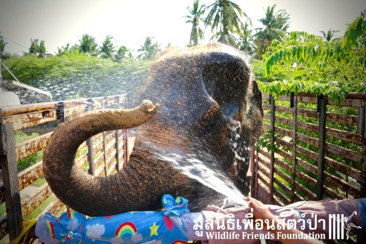 elefante-obligado-trabajar8