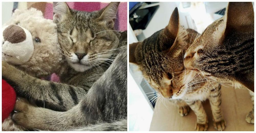 gatitos-ciegos