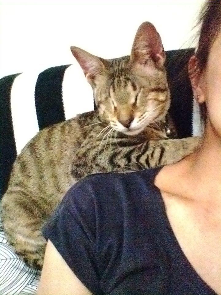 gatitos-ciegos2