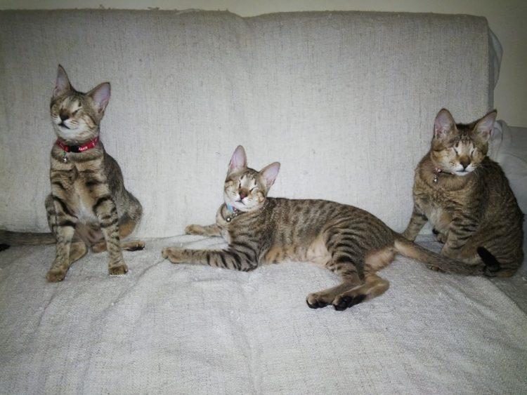gatitos-ciegos3