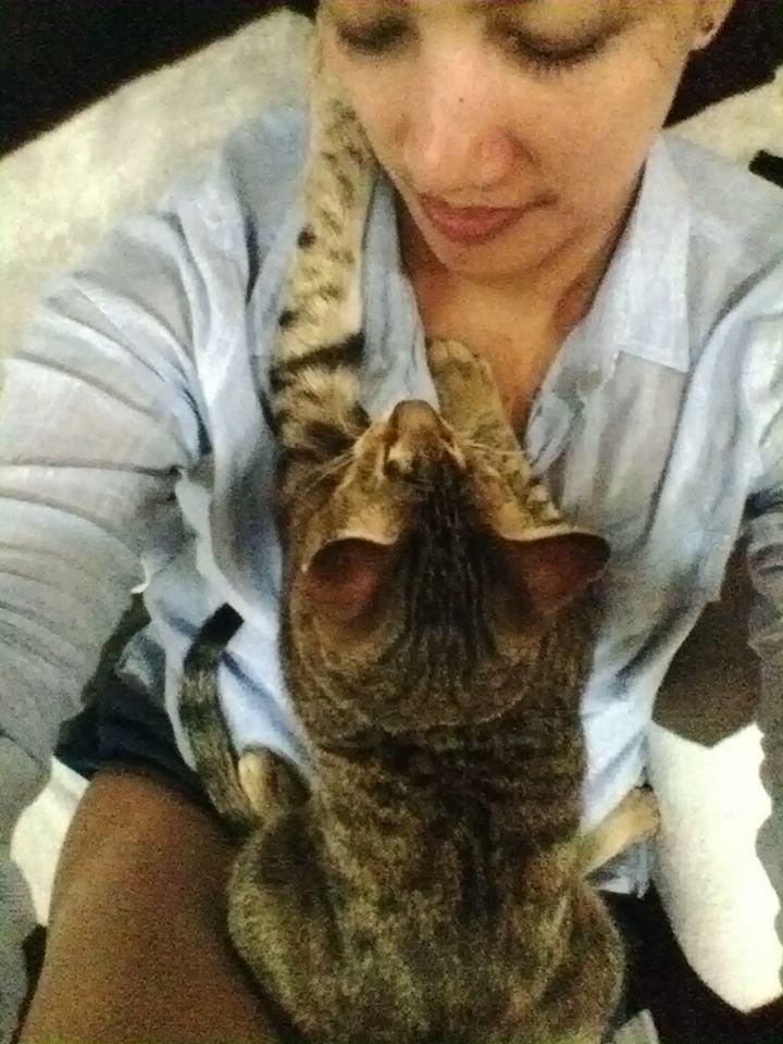 gatitos-ciegos5