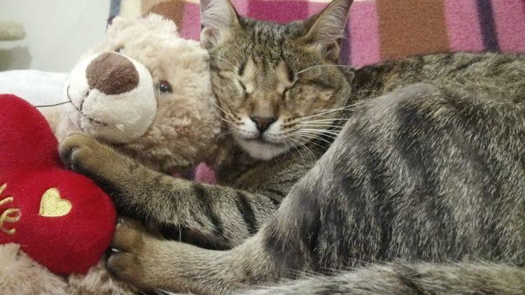 gatitos-ciegos7