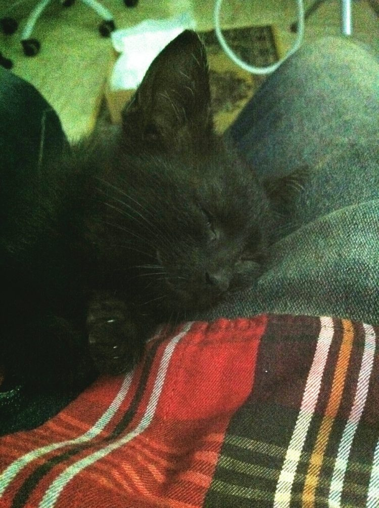 hombre-salva-gatito2