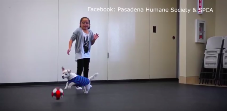 nina-sorda-perro4