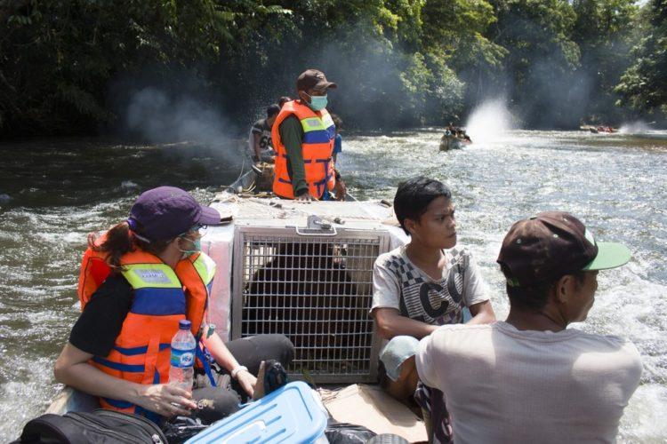 orangutanes-vida-salvaje9