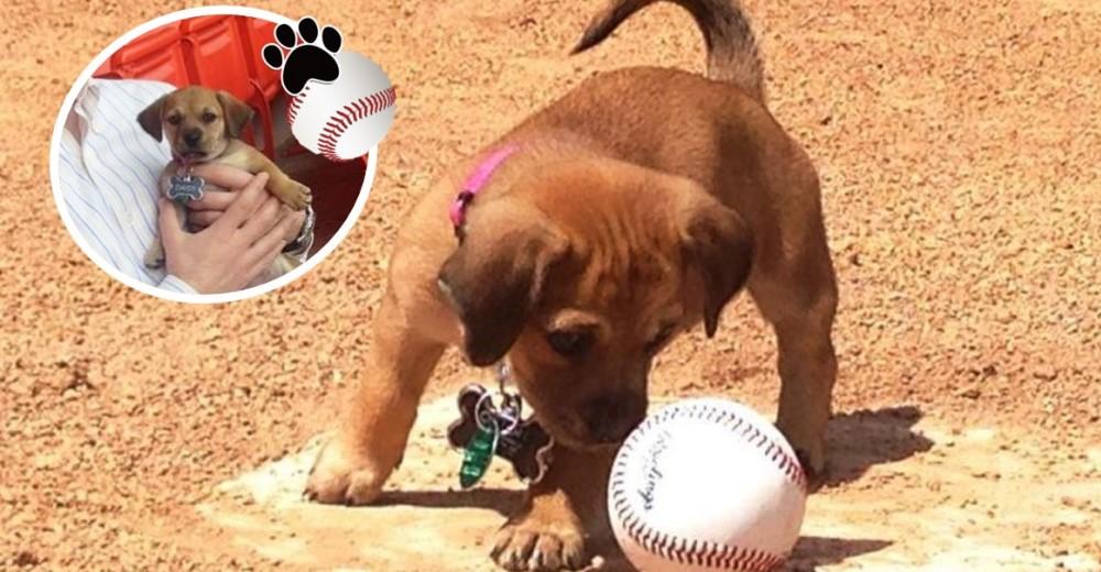 perrita-rescatada-por-equipo-de-beisbol