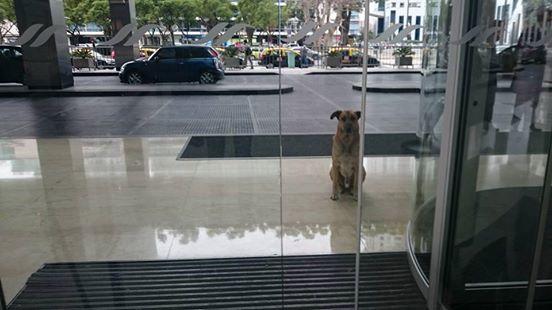 perro-hotel3
