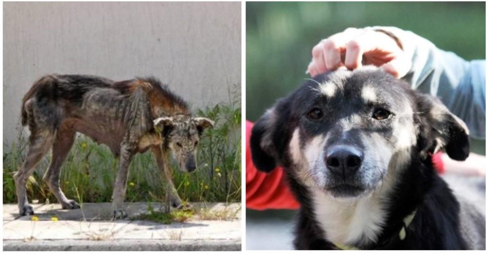 perro-piedra1-rescatado -grecia