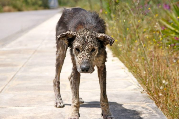 perro-piedra2