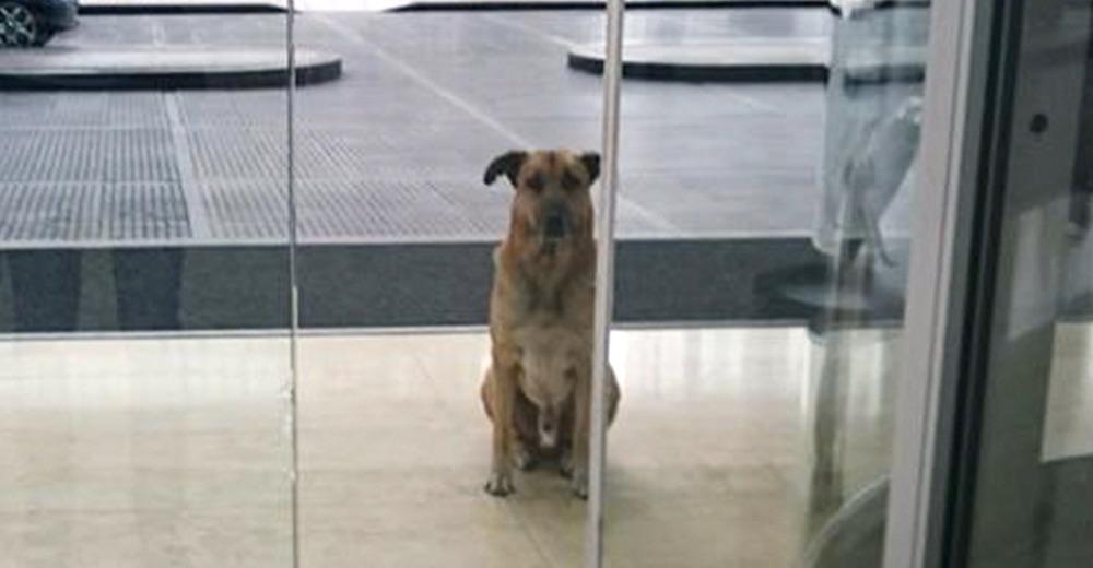 perro-puerta