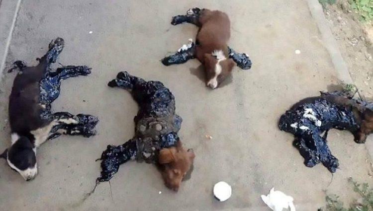 perros-rescatados-banados-alquitran1