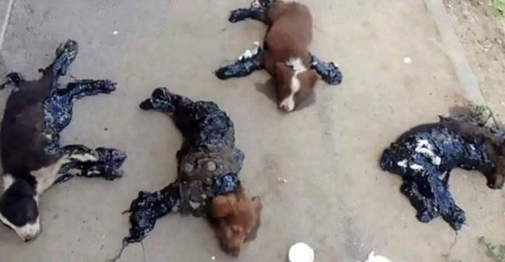 perros-rescatados-banados-alquitran2