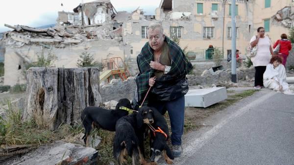perros-rescatistas-terremoto-italia1