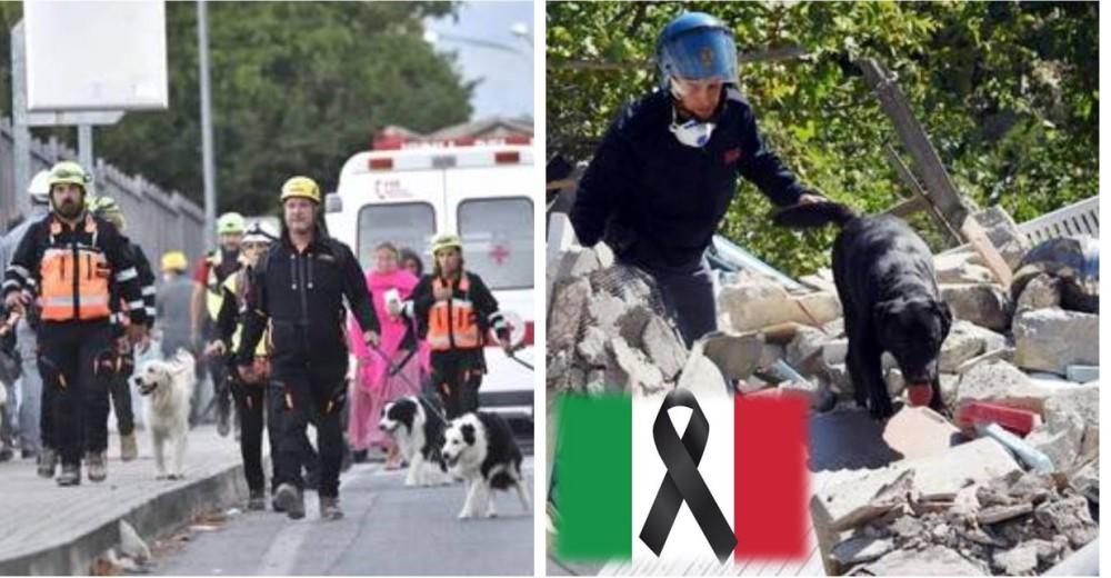 perros-rescatistas-terremoto-italia3 - Copy