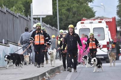 perros-rescatistas-terremoto-italia4
