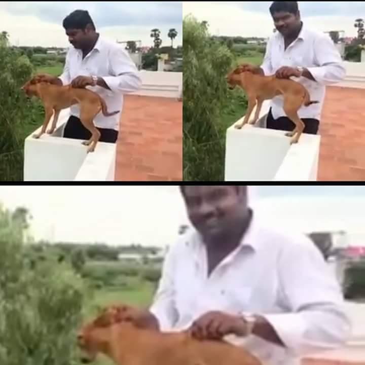 sally-perro-lanzado-india