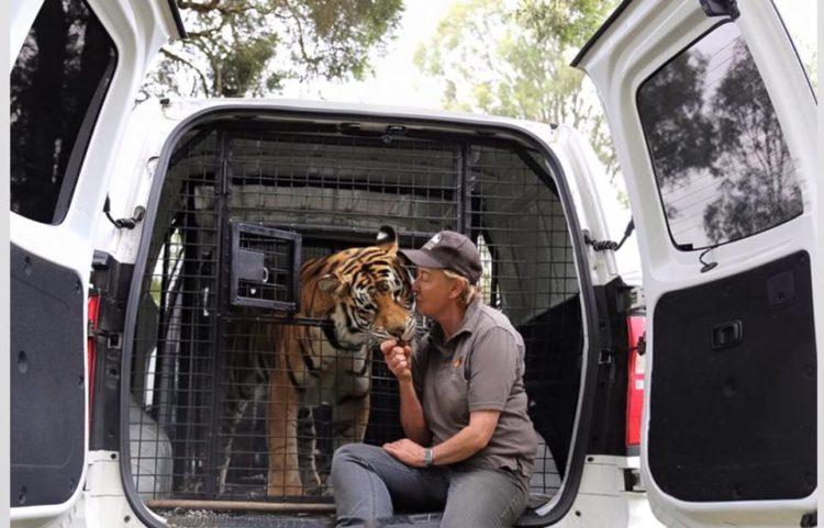 tigre-ciego5