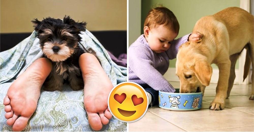 11-pequenos-placeres-de-tener-un-perro