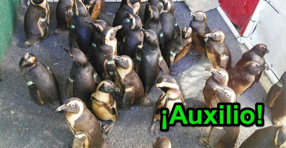 92-pinguinos-id