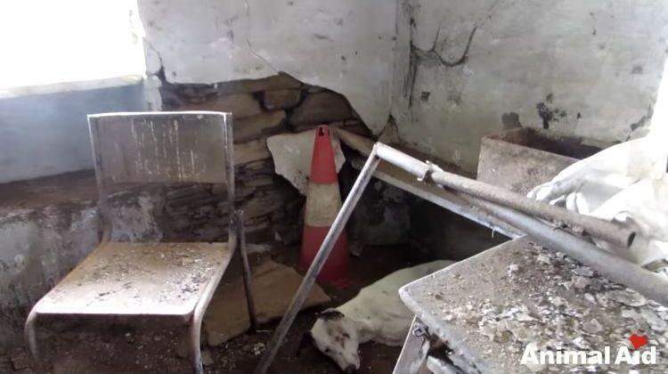 alby-perro-rescatado-01-750x469
