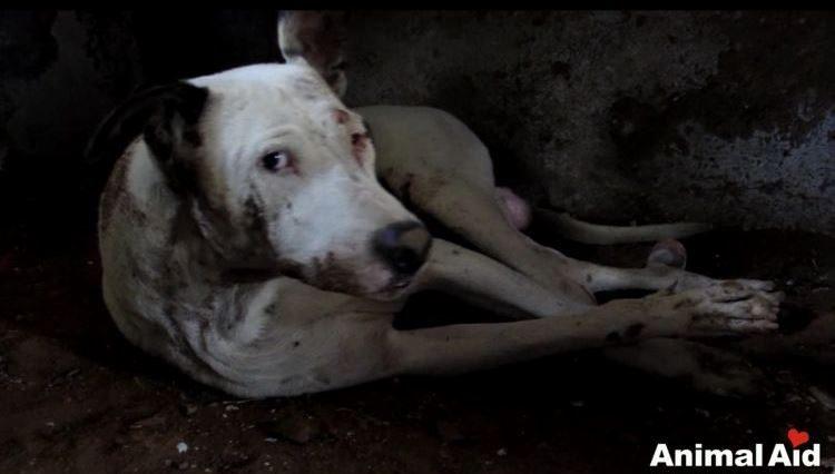 alby-perro-rescatado-02