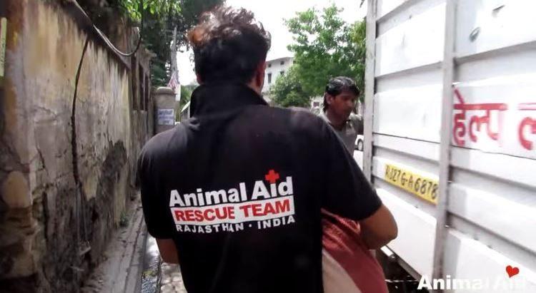 alby-perro-rescatado-05