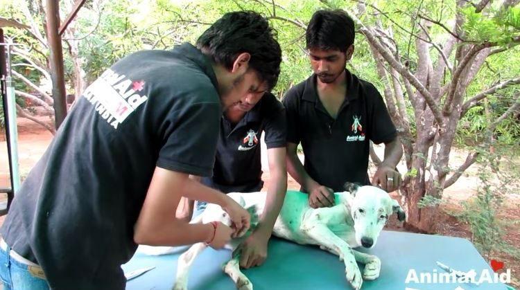 alby-perro-rescatado-06