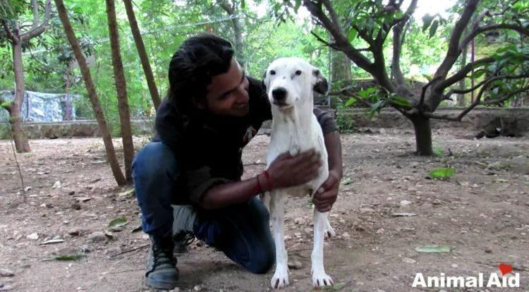 alby-perro-rescatado-07-750x469