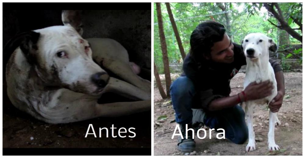 alby-perro-rescatado-portada