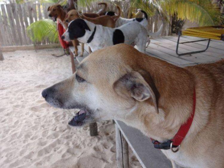 animal-rescue-bonnie-beach-1