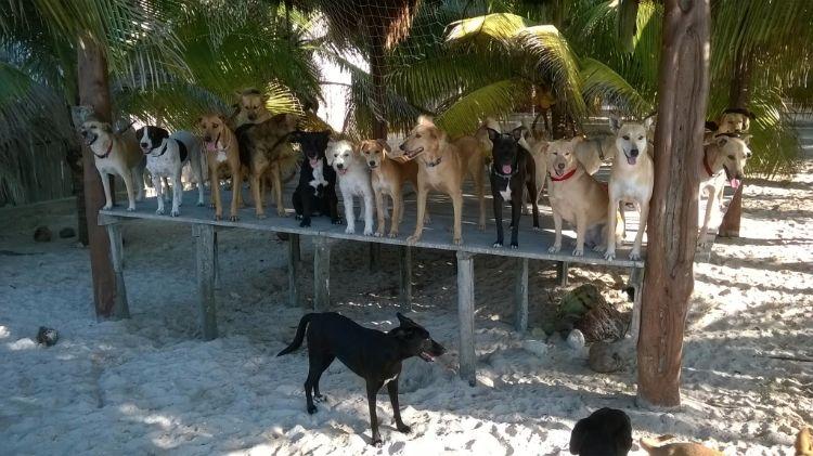 animal-rescue-bonnie-beach-3
