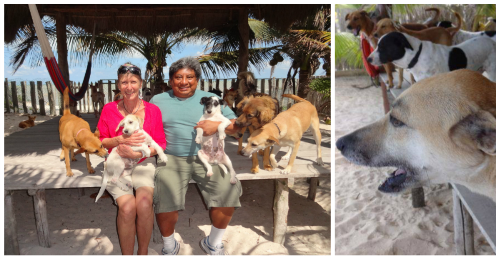 animal-rescue-bonnie-beach-portada