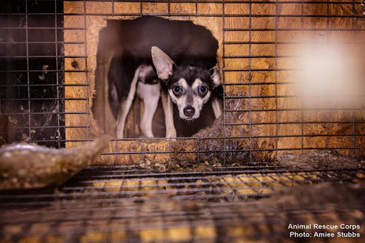 autoridades-rescatan-casi-200-animales-de-un-criadero-infernal-en-senatobia-estados-unidos-11