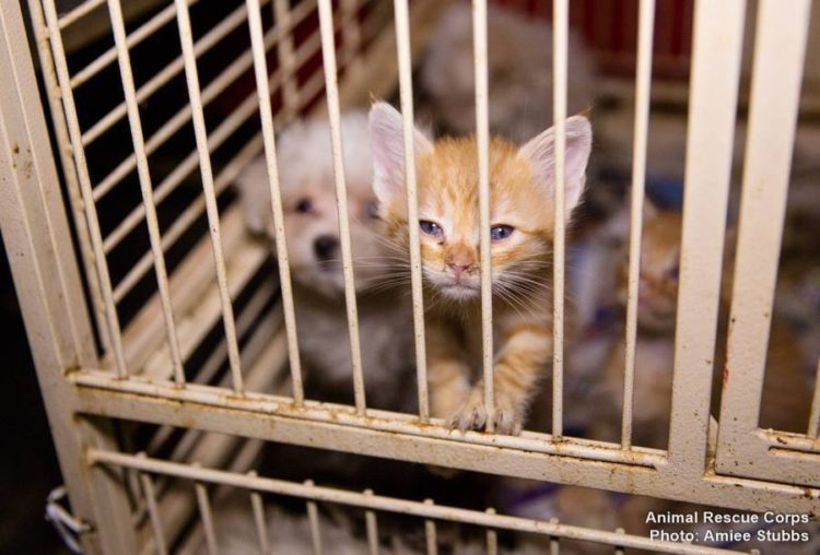 autoridades-rescatan-casi-200-animales-de-un-criadero-infernal-en-senatobia-estados-unidos-14