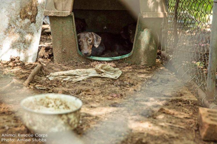 autoridades-rescatan-casi-200-animales-de-un-criadero-infernal-en-senatobia-estados-unidos-5
