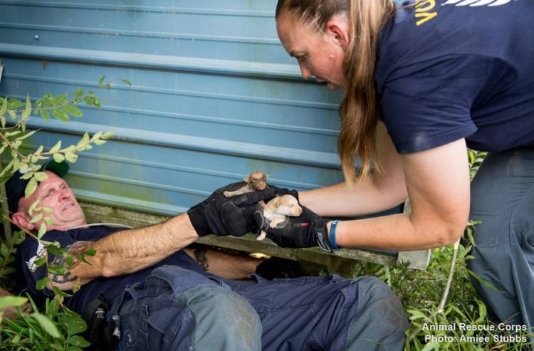 autoridades-rescatan-casi-200-animales-de-un-criadero-infernal-en-senatobia-estados-unidos-6