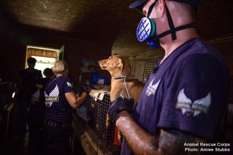 autoridades-rescatan-casi-200-animales-de-un-criadero-infernal-en-senatobia-estados-unidos-8