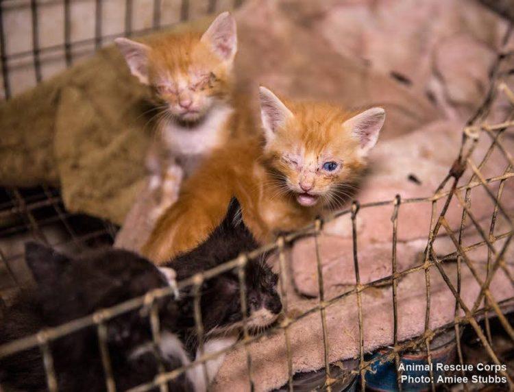 autoridades-rescatan-casi-200-animales-de-un-criadero-infernal-en-senatobia-estados-unidos-9