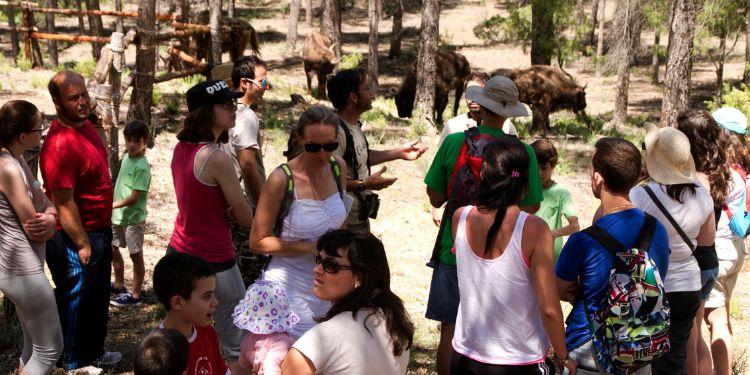 bisonte-decapitado-reserva-valdeserrillas-8